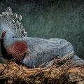 Zoo Bcn. Fotografia Andreu Gual