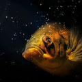pez oscar Fotografia Andreu Gual