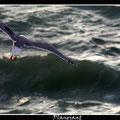 Sobrevolando el mar. Fotografia Andreu Gual