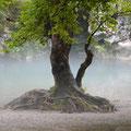 """""""Nebel"""" von Ing. Hannes Bohaumilitzky 5.) GW. u. 4.) EW."""