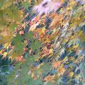 モミジ葉の織り成す風情です・・・♪