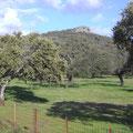 Vista de la elevación mayor del territorio Peña Utrera (Buitrera) 815 m.Colonia de Buitres y el mejor mirador de la mayor concentración de dehesas de España y magnifico para avistamiento de aves.
