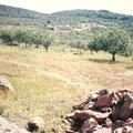 Terreno estudiado geobiológicamente, antes de construir.