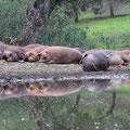 Medio de vida: Cría del cerdo ibérico adehesado.