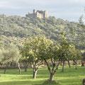 Castillo rodeado de vegetación. Vista desde la zona de la Carretera a Jerez de los Caballeros.