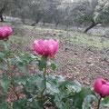 Botánica. Según expertos, todo el área del término de Salvatierra es una de las de mayor concentración botánica de Europa.