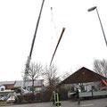 Mit einem 70t Kran wird der Baum an seinen Lagerplatz gelegt