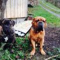 Aragon und Enzo