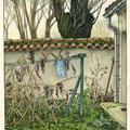 Bout de jardin en friche
