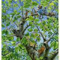 Vert cerise ( VENDU )
