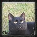 Kalinka heißt jetzt Cleo und wohnt in Aach