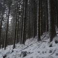 Forêt Cros - Massif Central - Déc 2011 @ Florian Bernier
