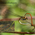 Amours acrobatiques - page 7 © Florian Bernier