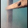 Limnée sur ponton, Lac d'Annecy - Sept 13  © Florian Bernier
