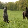 v.l.n.r.Amanda und Beast