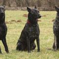 Mama Darcy mit ihren beiden Söhnen; v.l.n.r.Flash, Darcy und Hektor