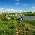 Parc du Marquenterre, Baie de Somme