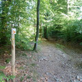foret_chabrieres_gueret