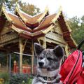 13 Wochen alt - im Buggy im Bad Homburger Kurpark unterwegs
