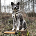 5 1/2 Monate - Spaziergang im Wehrheimer Wald