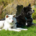 Sumi mit Bruder Maru
