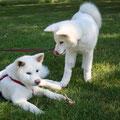 Sumi und ihre Freundin Suki