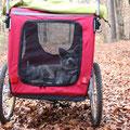 17 Wochen alt - gemütlich im Matamobil bei der Wanderung