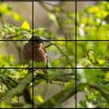 Ein Bild, viele Möglichkeiten: Buchfink. Die Ausrichtung gemäß des Goldenen Schnitts fügt den Buchfink harmonisch in das Bild ein, ohne es zu dominieren.