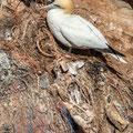 """""""Ein Nest aus Tod und Plastik"""" - Jochen S. (Oberstufe+)"""