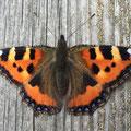 """1. Platz Plus-Kategorie: """"natürliche Symmetrie - Schmetterling"""" von Wolfgang A."""