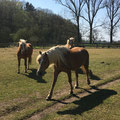"""1. Platz (Orientierungsstufe): """"6 Pferde auf der Weide"""" von Melina"""