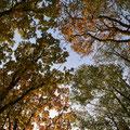"""1. Platz (Mittelstufe): """"buntes Herbstlaub"""" von Carolin"""