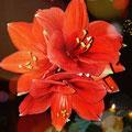 """3. Platz (Orientierungsstufe): """"Blumen-Power"""" von Mira K."""