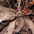 Schmetterling und Dahlienknospe von Sybille K.