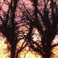 2. Platz (Orientierungsstufe): ZWEI Baumgestalten im Sonnenaufgang von Carolin S.