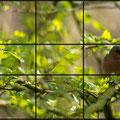 Ein Bild, viele Möglichkeiten: Buchfink. Durch den fehlenden Fokus wirkt das Bild unruhig.