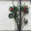 """""""Mauerblümchen können auch strahlen"""" von Marlene G."""
