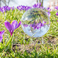 Frühling - in Bild und Kugel konserviert von Jochen S.