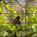 Ein Bild, viele Möglichkeiten: Buchfink. Der Farbkontrast lenkt den Blick, doch harmonisch wirkt das Bild nicht.