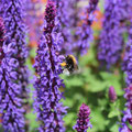 """""""Im Lavendel-Dschungel"""" von Lilly W."""
