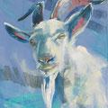 """De bok"" 2018, acryl en pastel op canvasdoek, 30x80cm"