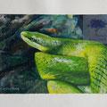 In Artis, acryl en aquarel op ongespannen canvas, prijs 160,00e