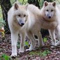 Wolfspark-Dörverden