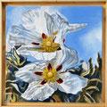 Flor de Esteva - óleo com areia na tela - 50 x 50 cm