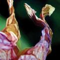 Gemelos, 2006, óleo sobre lienzo, 195x130 cm