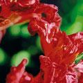 Momento V, 2007, óleo sobre lienzo, 120x80 cm