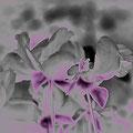 Ich sehe - in den Blütenstempeln  Gestalten