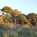 Die Duhner Heide