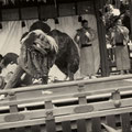 昭和34年10月 正遷宮奉祝神祭 桂連奉納 六齋(無形文化財)