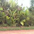 Impressionen von der Vegetation
